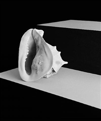 from the series flowers, fruits & portraits [shell-05-2009] by shirana shahbazi